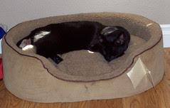 I has a bed!
