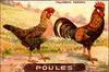 poules 19