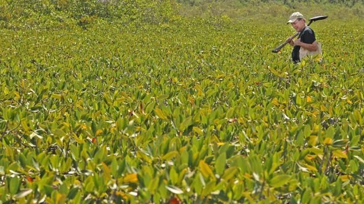 MangroveStarts