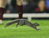 Squirrel: Nuts