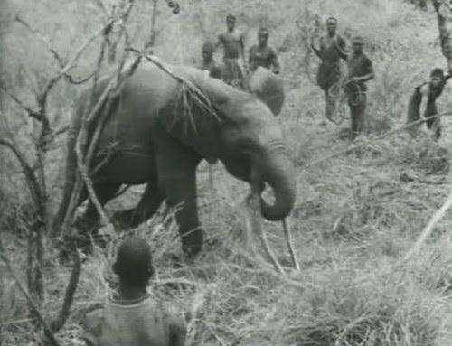 Elephant%20Capture-11 by bucklesw1