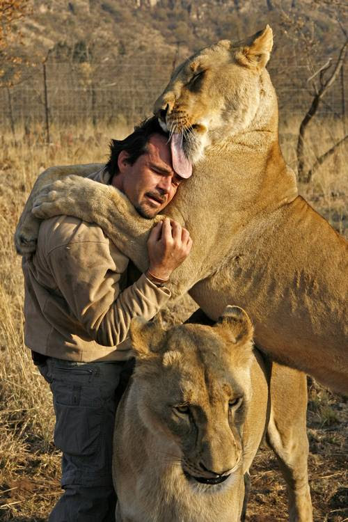 Львица лижет Кевина Ричардсона. Фото