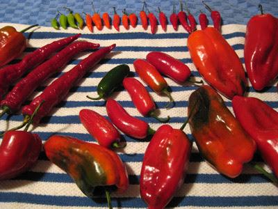 chili drying 1