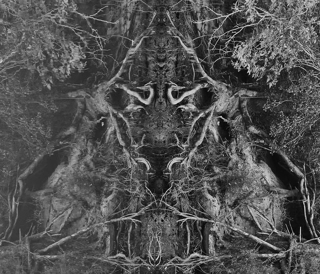 Root Mirror (6)