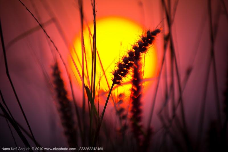 Pricky Sunset, Kulmase
