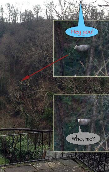 lost-sheep.jpg