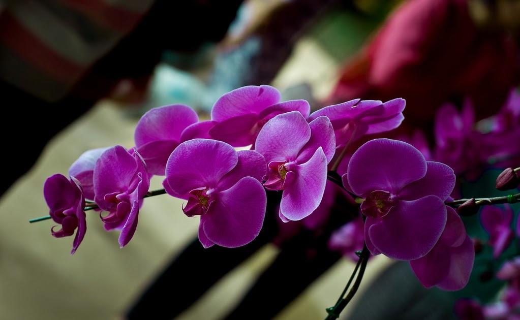 de l 39 autre c t de chez siam les orchid es nord de la. Black Bedroom Furniture Sets. Home Design Ideas