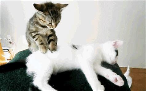 kumpulan gambar gif lucu edisi kucing