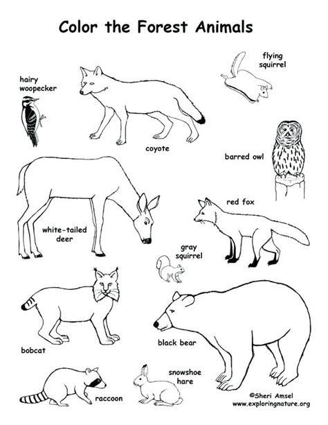 savanna animals coloring pages  getcoloringscom