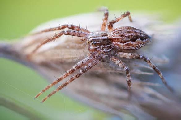 Εκπληκτικές macro φωτογραφίες εντόμων (14)