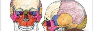 Human Anatomy Coloring Book Pdf Free Download