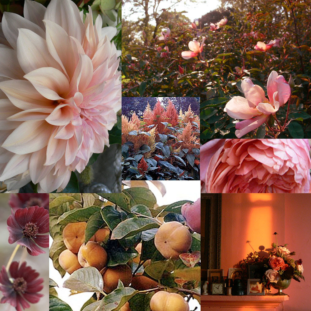 copper_rose
