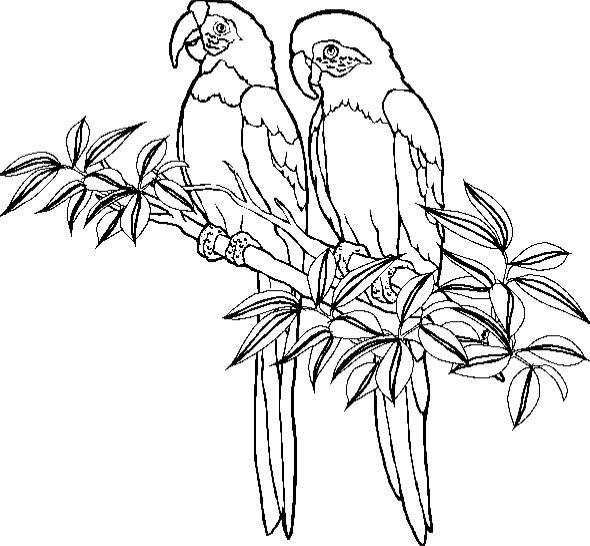Boyama Sayfaları Papağanlar Hareketli Resimleri Gifleri