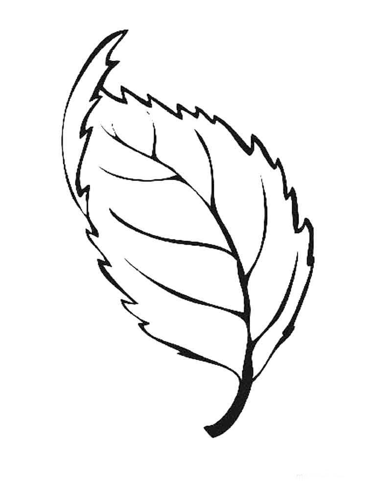 Yapraklar 10 ücretsiz Boyama Resimleri