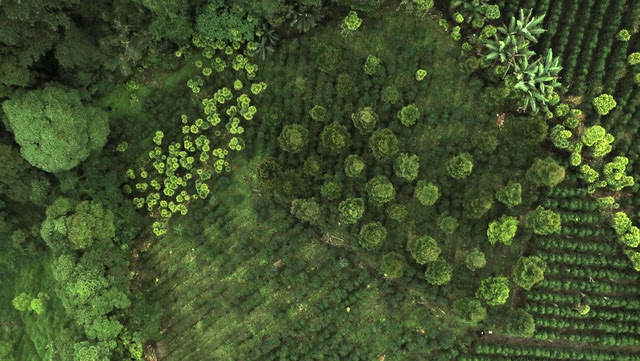 Swarms of Drones Will Be Mapping the World All By Themselves in No Time