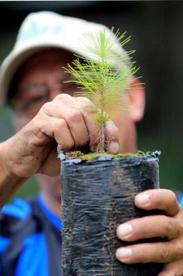 reforestación en Honduras