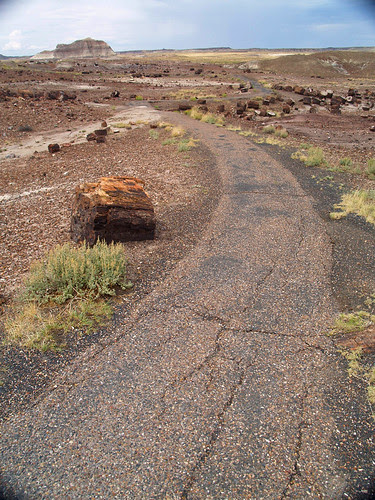 Petrified Forest