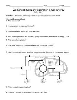29 Overview Of Cellular Respiration And Fermentation Worksheet Free Worksheet Spreadsheet