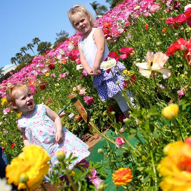 Carlsbad Flower Fields April 2012 19
