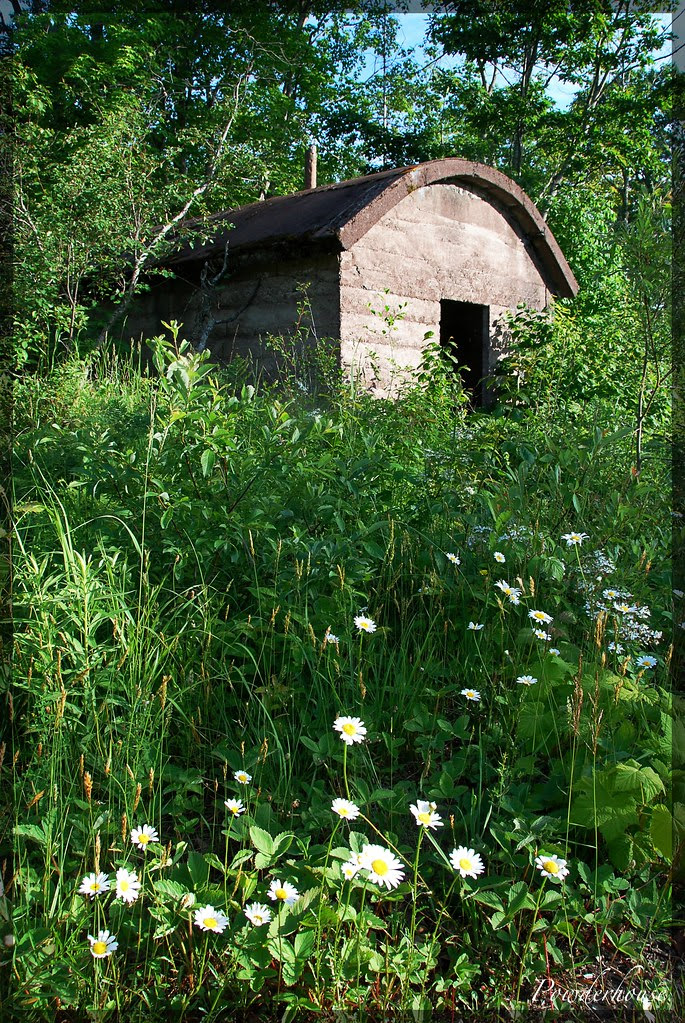A small cement building with a curved roof and doorway, hidden among overgrown weeds and daisies.