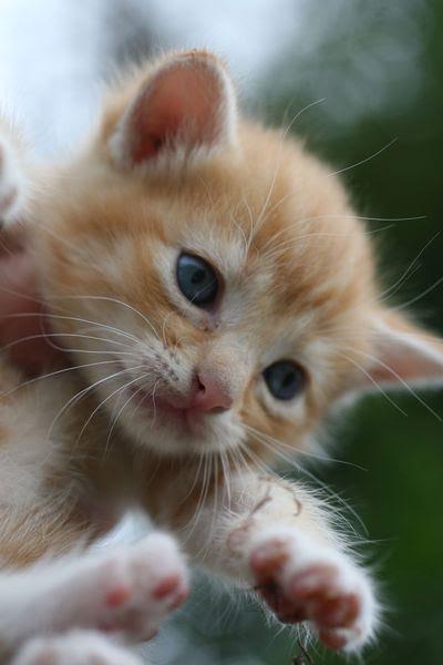 Kittens-5