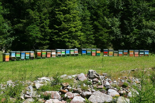 beehives by _edivad, on Flickr