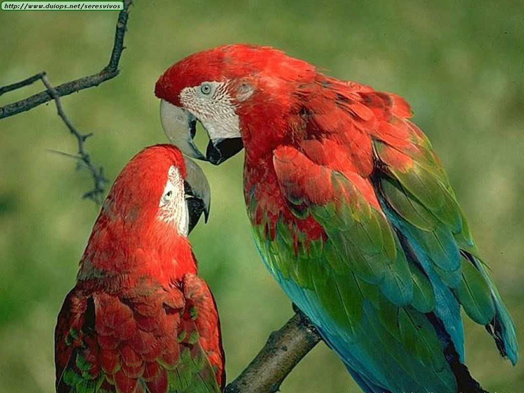 Image Gallery of Contoh Gambar Sangkar Burung Nuri