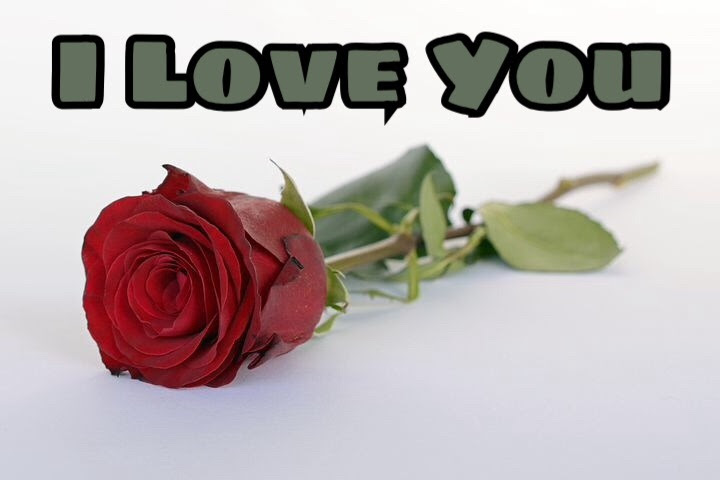 50 I Love You Images With Roses Love You Red Rose Image Download