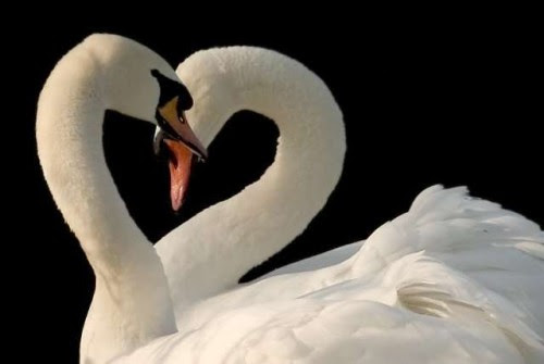 Perierga.gr - Αληθινή αγάπη!