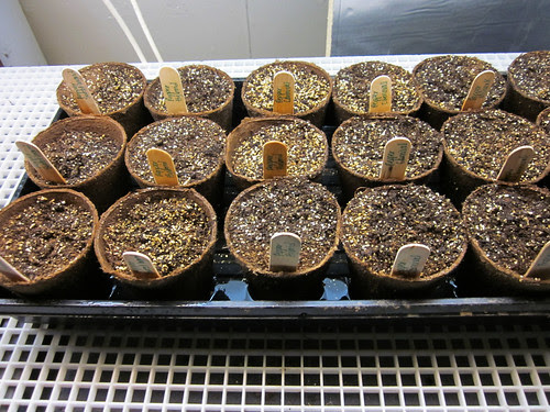 seed experiment 2010