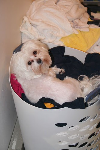Why does our dog love to lay down in stinky stuff?