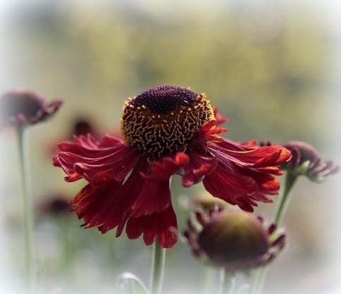 photo Flower_zps2ea54d17.jpg