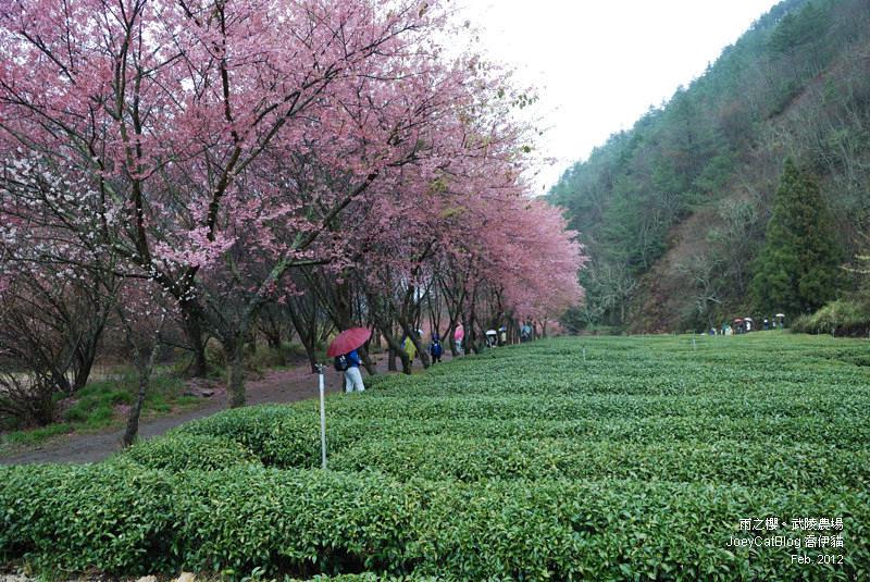 2012_0227_雨之櫻。武陵農場DSC_4339_24
