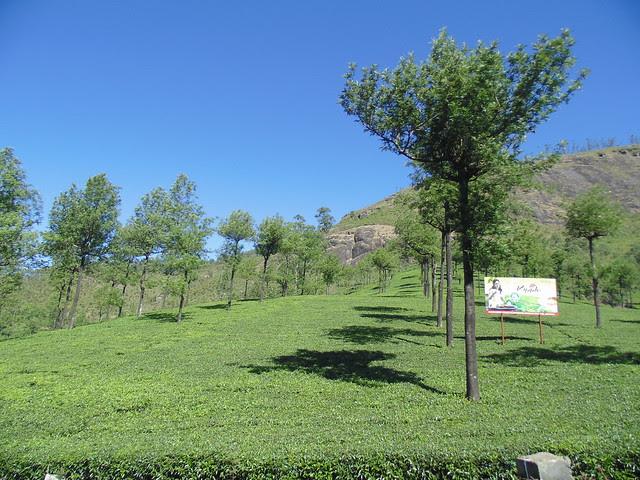 View Point near Munnar, Kerala