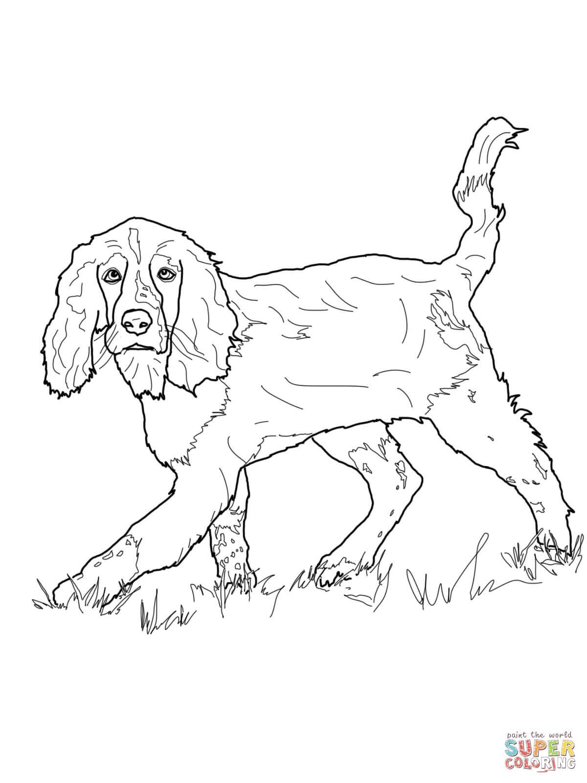 ausmalbilder mops hund  top kostenlos färbung seite