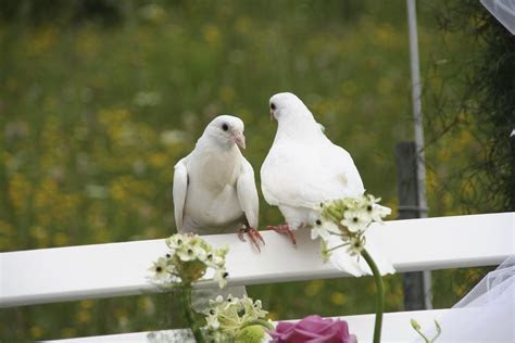 Wedding doves   Articles   Easy Weddings