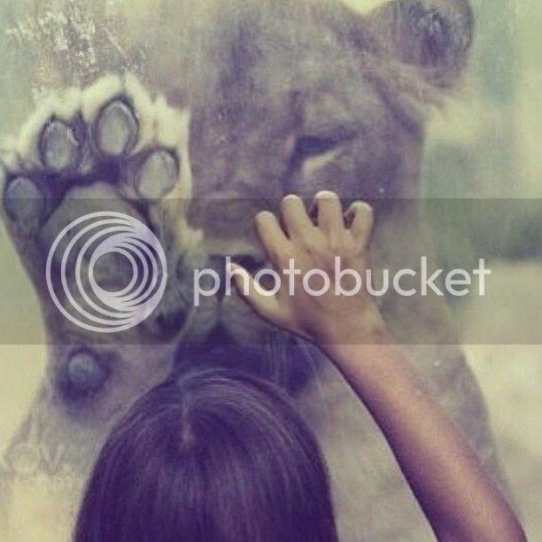 photo lion_zps7da8f50a.jpg