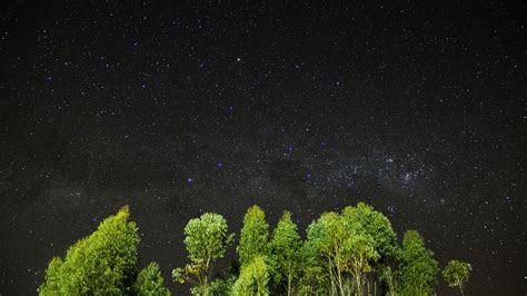wallpaper night stars sky trees  nature