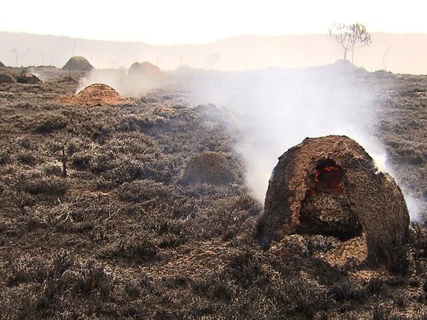 Impacto à fauna da região da Serra do Cipó ainda é avaliado (Foto: Reprodução/TV Globo)