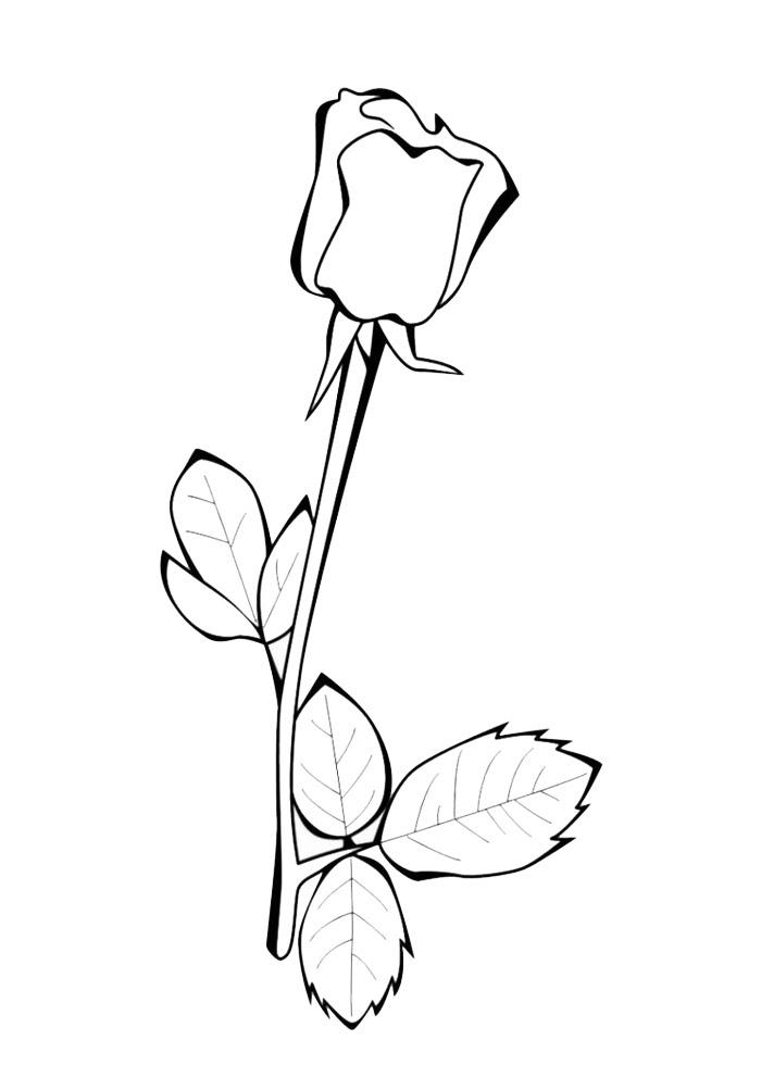 Disegno Di La Rosa Da Colorare Per Bambini Disegnidacolorareonlinecom