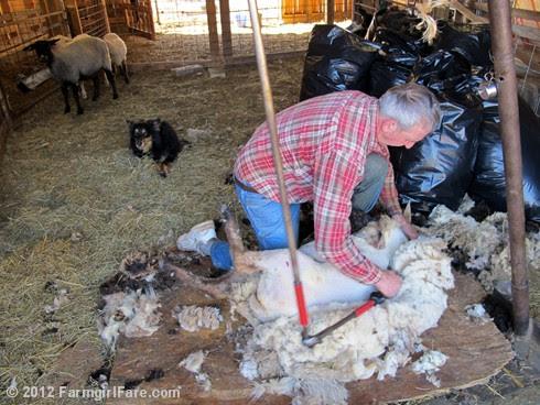 2012 Sheep shearing day 39 - FarmgirlFare.com