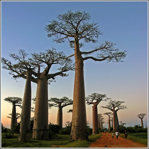Sunset in the Baobab Avenue por Zé Eduardo...