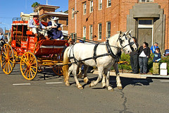IMG_0245_Grenfell_Henry_Lawson_Festival_of_Arts_2008