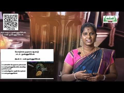 11th Microbiology  இயல் 10  பகுதி 1  Kalvi TV