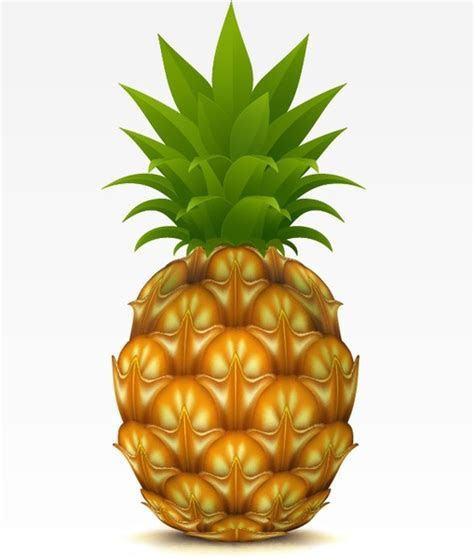 Pineapple free vector download (150 Free vector) for