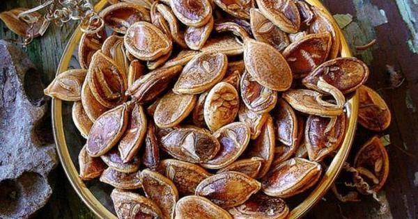 semillas antiguas 2