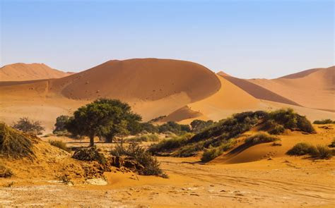 Luxury Holidays in The Namib Desert   Safari Holidays