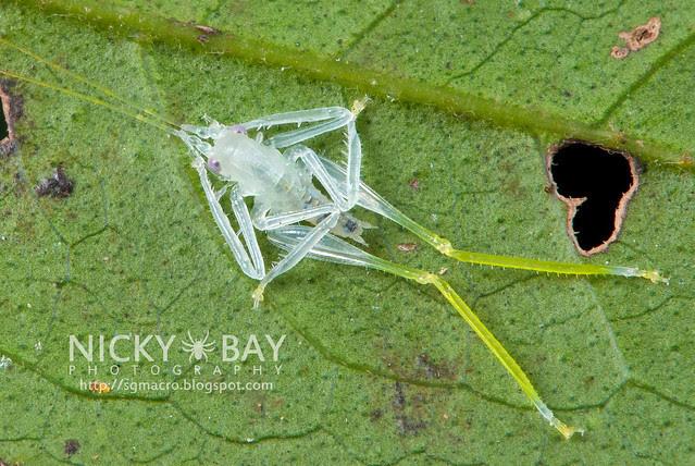Freshly moulted Katydid? Cricket? - DSC_2071