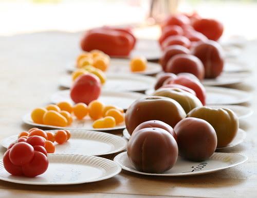 Tomato tasting party / Tomatite degusteerimine, 2010