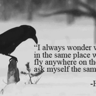 Harun Yahya Quote On The Birds Will To Stay In The Same Place When